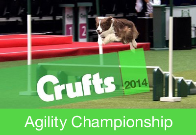 CRUFTS 2014 - How were you inspired?